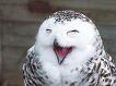 [TIP]파이어폭스로 IE6(internet eplorer6;익플6;인터넷 익스플로러6) 이용하기