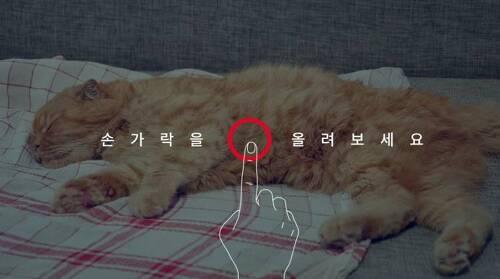 데이터 부족한 사람을 위한 캣티의 말씀! 귀여운 고양이 배경화면까지!