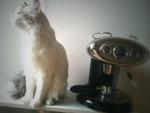 고양이, 에스프레소 머신