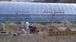 [나무심기] 귀촌 후 첫 농사로 과일나무를 심었습니다/남원 자연농원/무심기 좋은 계절/과일나무 심기/나무심기 요령/유실수 묘목가격/묘목 판매가격