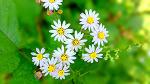 추석 즈음에 만개한 아름다운 꽃