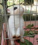죽다살아난 숫토끼 복실이, 특별한 토끼