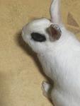 오랜만에 전하는 애완토끼 복실이 소식~!