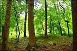 ( 전북 부안 ) 능가산 내소사-전나무 숲길