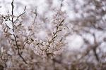 2018 봄, 봄
