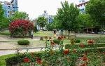 원주 장미축제 2018 6월에 만날 수 있는 기대되는 꽃축제