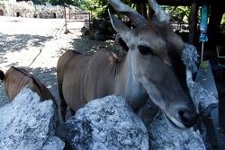 C#14. 동물원 구경 (7월17일 am 10:30 ~ 7월18일 am 2:00)