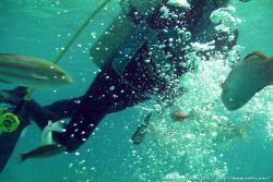 [북마리아나 > 티니안] 타촉냐 비치(Tachogna Beach)에서 체험 스쿠버다이빙을...