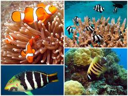 """[호주 신혼여행] 산호바다가 만들어낸 케언즈의 """"그레이트 베리어리프"""""""