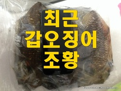 최근 갑오징어 조황