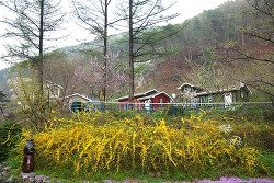 [산사랑] 이깔나무 숲으로 스며든 충북 영동 허동일 씨 가족