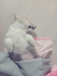 [천억]  개꿀잠
