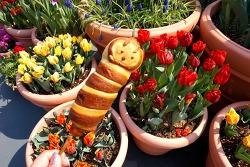 봄꽃이 핀다, 봄 메뉴가 핀다✿