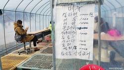 대전에서 무료로 얼음썰매를 탈수 있는 곳은?
