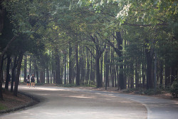 서울특별시에서 가장 마음에 드는 공원을 꼽으라고 한다면 전 바로 서울숲 공원이라고 말하겠습니다.