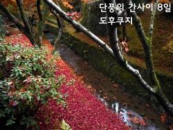 단풍의 간사이 - 8일 교토 라쿠난7 (홋쇼지法性寺, 도후쿠지東福寺)