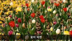 이 좋은 봄날에 당신을 기다립니다