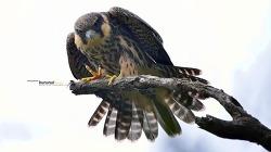 새홀리기 혹은 새호리기#7 초보의 비행