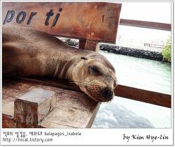 [적묘의 갈라파고스]이사벨라 섬 입도비, 무료 스노클링 Galápagos