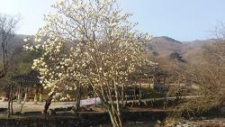 봄이 왔어요!...