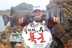 여름 대마도 낚시(6), 바다의 폭군 돌돔과 강담돔