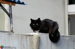 담위의 검은 고양이