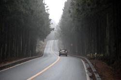제주도 드라이브 삼나무 숲길을 달려보자