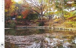 가을 고궁 - 창경궁에서 #3