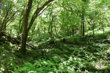 비자림, 지미봉 등 놀멍 쉬멍 걸으멍 즐기는 제주도 힐링여행