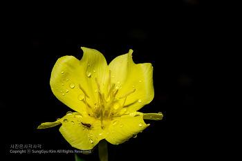 꽃접사(달맞이꽃, 프렌치 매리골드)