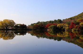 가을 벚꽃과 반영이 아름다운 진해의 숨은 단풍명소! 진해 내수면 환경생태공원 ( 진해명소/창원명소)