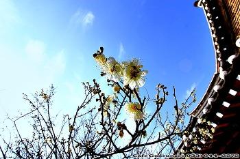 강원도 강릉에도 찾아온 봄이야기