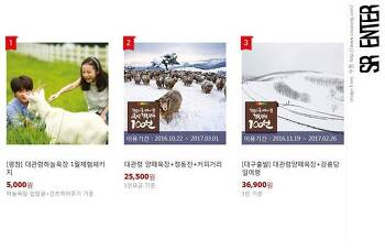 [강원] SR_정동진→안목커피거리→대관령 양떼목장 당일여행