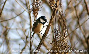 겨울산의 박새 사진