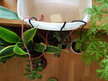 여행 떠나기 전에 아내가 식물에게 한 일