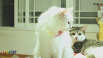 고양이 턱드름 잡기 프로젝트C_성공? 실패?