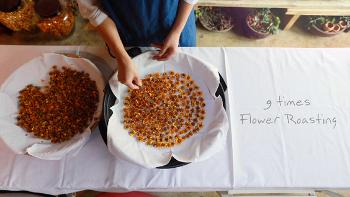 [대전 영상제작] 논산 마리골드 꽃차 제작영상
