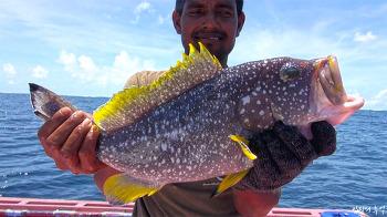몰디브 바다는 어종 백화점, 전통 줄낚시에 도전