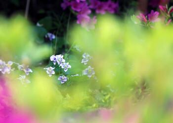 [창전동] 골목골목을 돌다가 만난 꽃