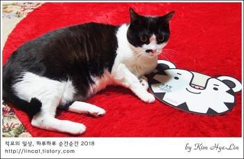 [적묘의 고양이]수호랑 vs 깜찍양,14살 노묘에게 촬영협조를!!!
