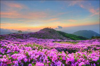 봄철댓글산책