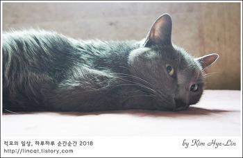 [적묘의 고양이]13살 막내 몽실양의 고민, 초롱 오빠의 꼬리