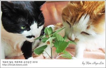 [적묘의 고양이]캣닙도 입맛대로!,묘르신 3종세트,개취, 개박하 취존