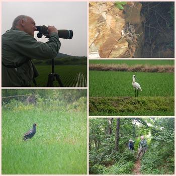 Guided Birding Tour in June 2018