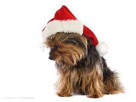 크리스마스, 겨울 배경화면