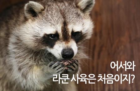 동물사육과 라쿤 사육 실습기 현장!