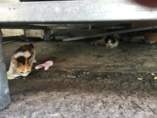 [길고양이] 시장에서 새끼 고양이를 만났다