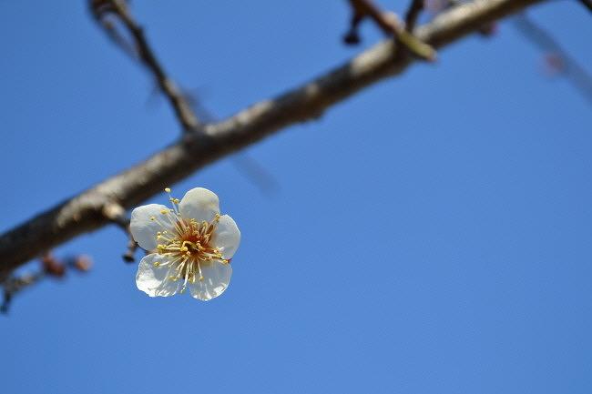 금강선원에도 매화꽃이 피었습니다
