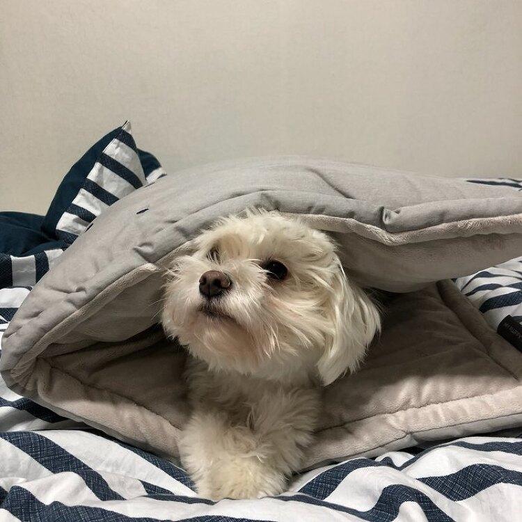 마약방석보다 더 좋아하는 퐁신퐁신 마이플러피 강아지방석