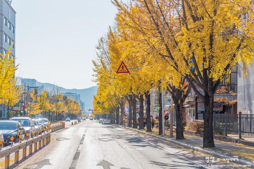 창원 가을 은행나무 길, 도심 속에서 즐기는 행복한 가을여행